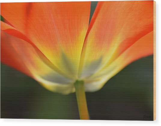 One Tulip Wood Print
