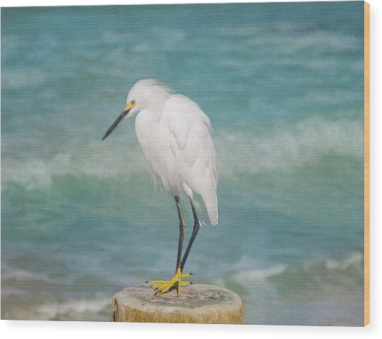 One With Nature - Snowy Egret Wood Print