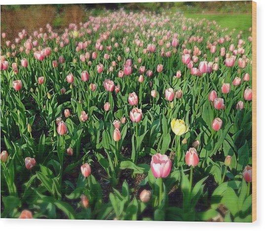 One Yellow Tulip Wood Print