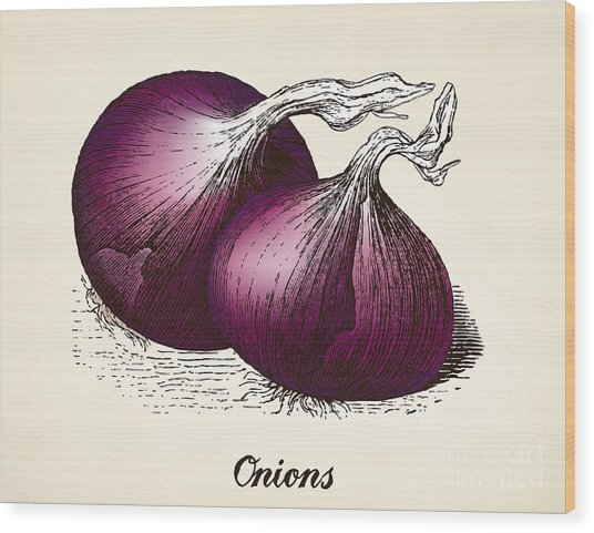 Onions Vintage Illustration, Red Onions Wood Print