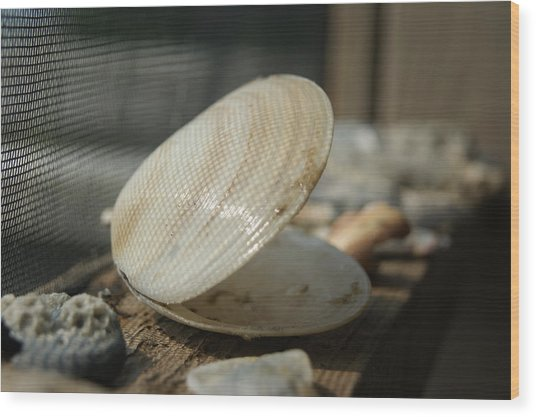 Open Seashell Wood Print by Anne Williamson