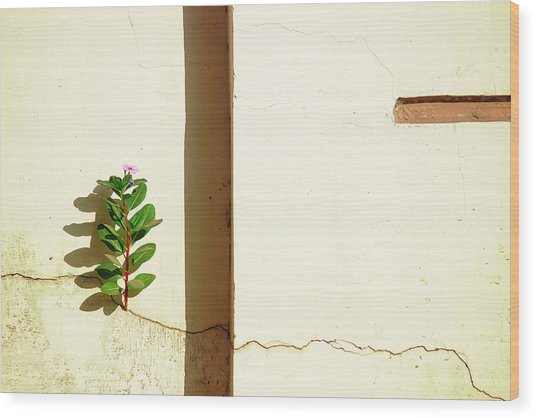 Optimism Pays Wood Print