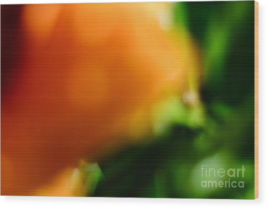Orange And Green  Wood Print by Bobby Mandal
