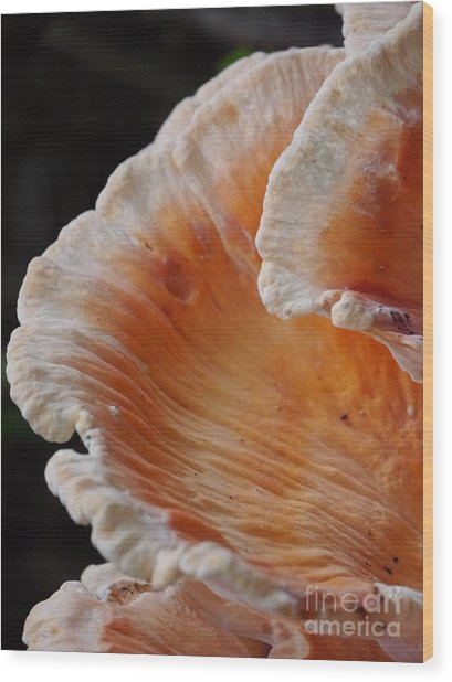 Orange And White Fungi Wood Print