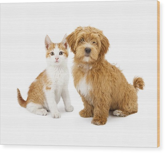 Orange And White Puppy And Kitten Wood Print