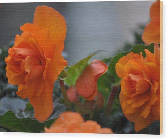 Orange Beauties Wood Print