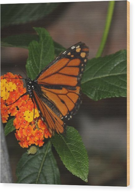 Orange Butterfly On Flowers Wood Print