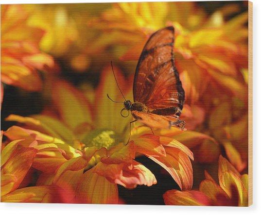 Orange Butterfly On Yellow Flowers Wood Print