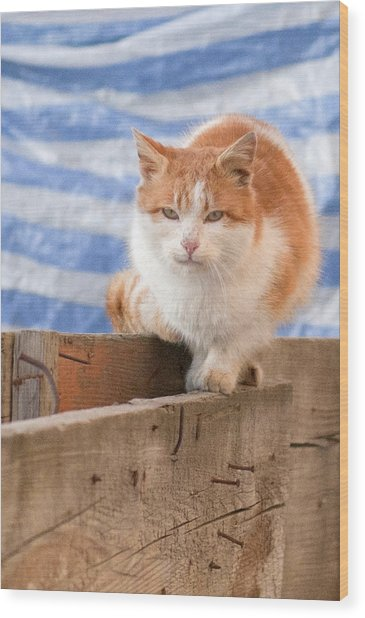 Orange Cat  Wood Print