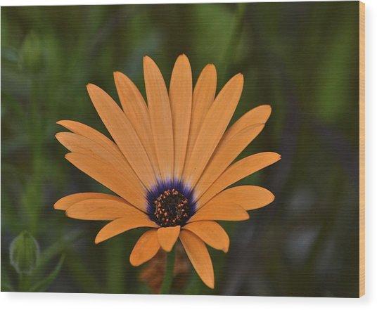Orange Cream Wood Print by Marjorie Tietjen
