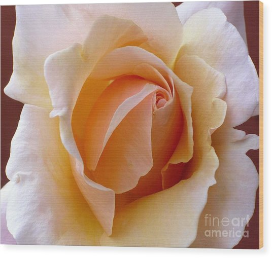 Orange Cream Rose Wood Print
