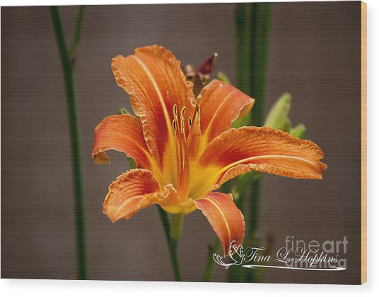 Orange Day Lily 20120620_27a Wood Print