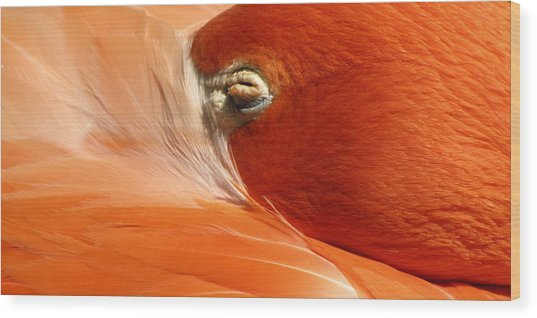 Flamingo Orange Eye Wood Print