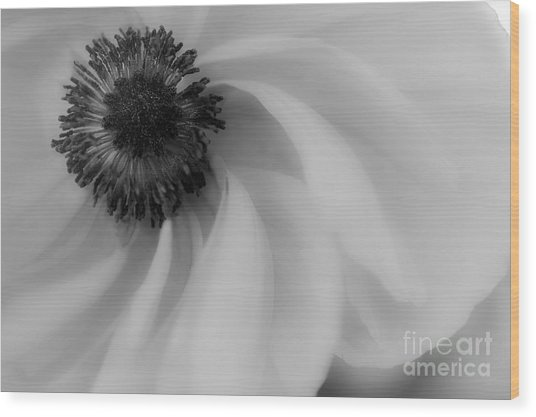 Orange Flower In Black And White Wood Print