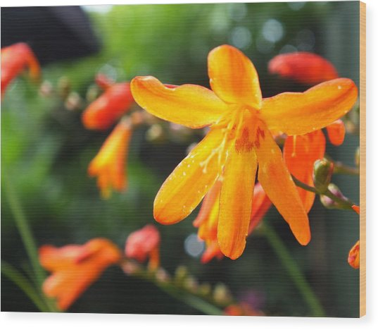 Orange Flowers Wood Print by Jason Davies