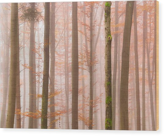 Orange Fog Wood Print
