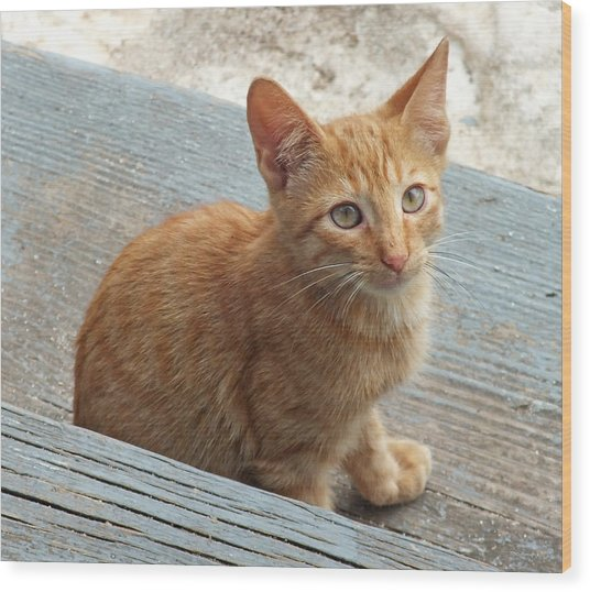 Orange Kitten 2 At The Front Porch Wood Print