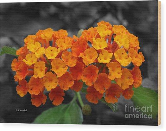 Orange Lantana Wood Print