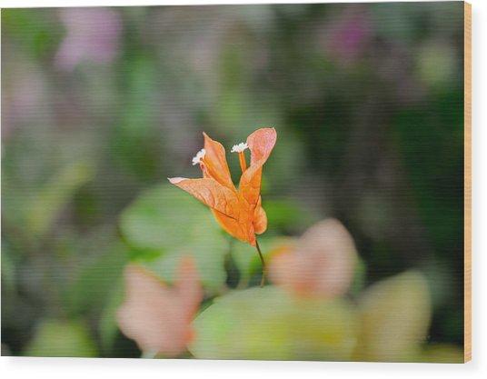 Orange Love Wood Print
