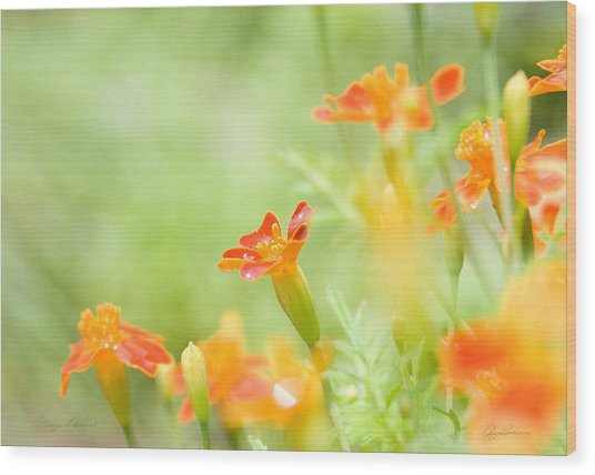 Orange Meadow Wood Print