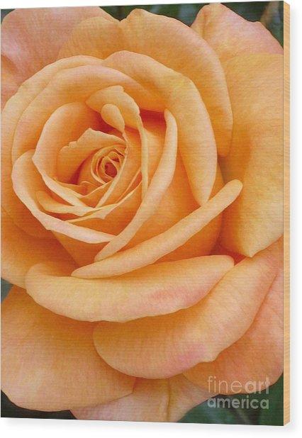 Orange Rose Blossom Special Wood Print