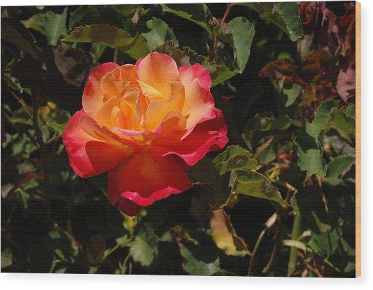 One Red And Orange Rose Wood Print