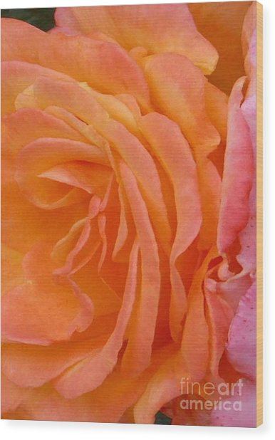 Orange Rose Swirl Wood Print