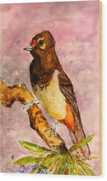 Orange-spotted Bulbul Wood Print