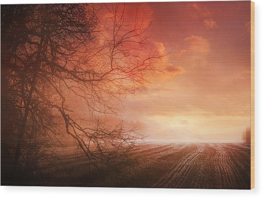 Orange Sunrise On Field Wood Print by Dorothy Walker