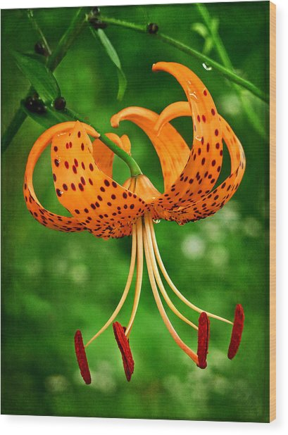 Orange Tiger Lily Wood Print