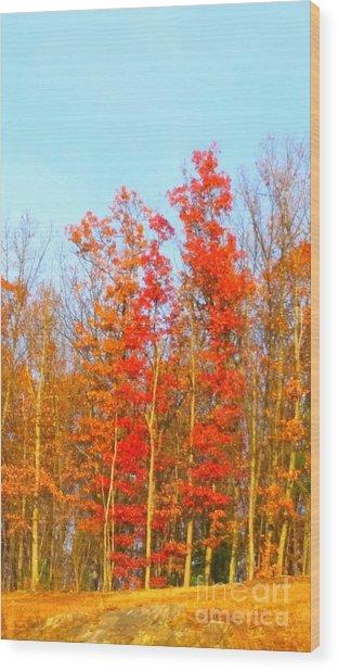 Orange Trees.  Wood Print