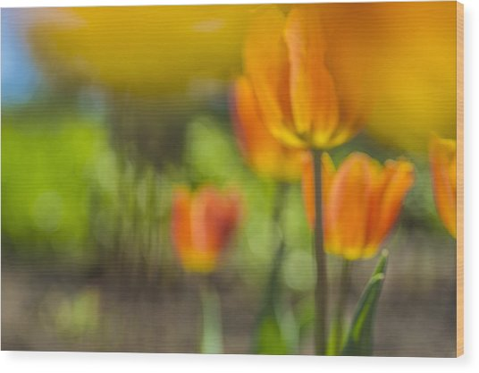Orange Tulip On Fire Wood Print