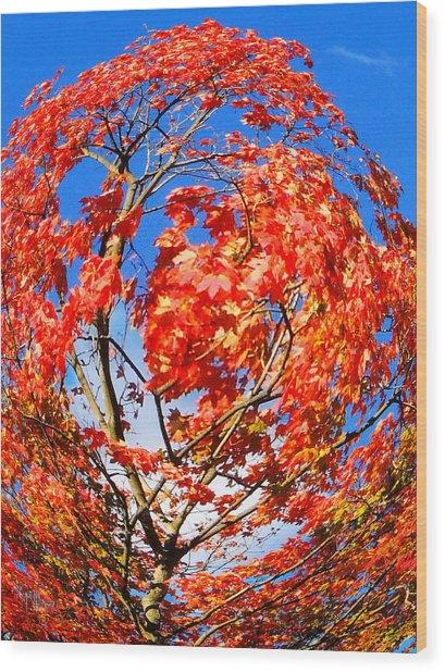Orange Twirl -1 Wood Print