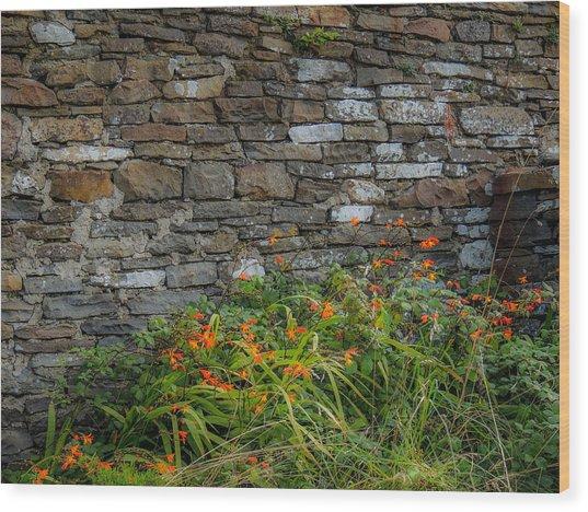 Orange Wildflowers Against Stone Wall Wood Print