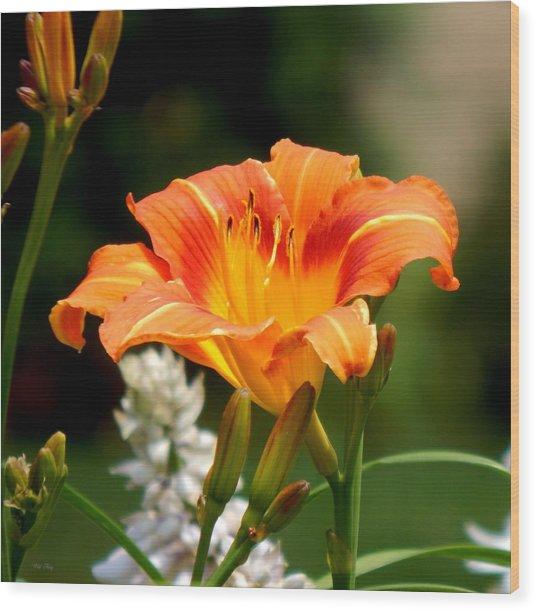 Orange And Yellow Glory Wood Print