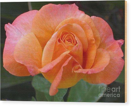 Orangerine Rose Wood Print