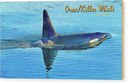 Orca Killer Whale Digital Art Wood Print by A Gurmankin