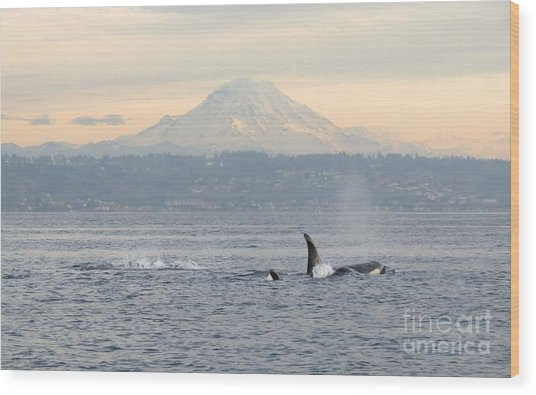 Orcas And Mt. Rainier Wood Print