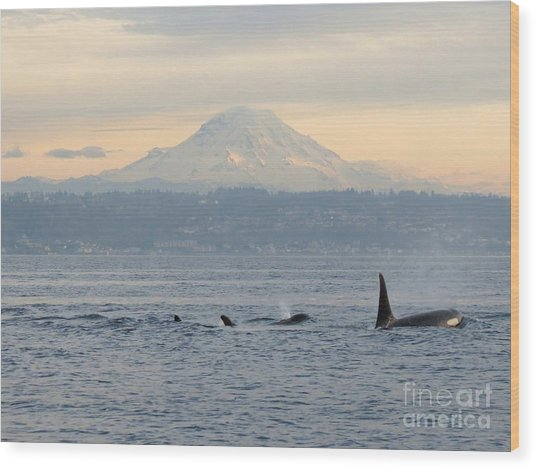 Orcas And Mt. Rainier II Wood Print