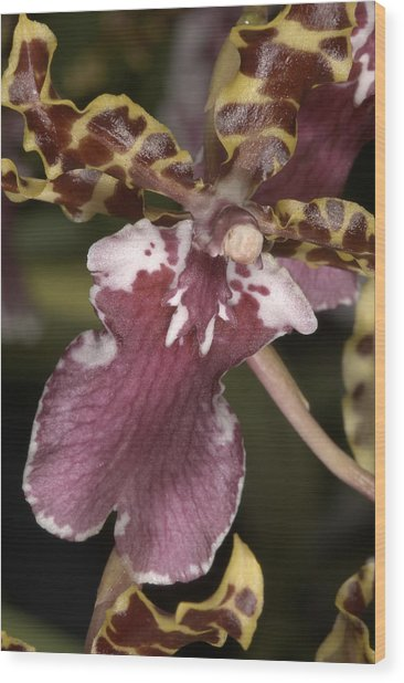 Orchid 482 Wood Print