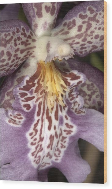 Orchid 483 Wood Print