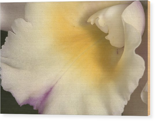 Orchid 486 Wood Print