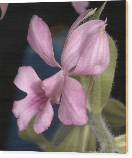 Orchid 488 Wood Print