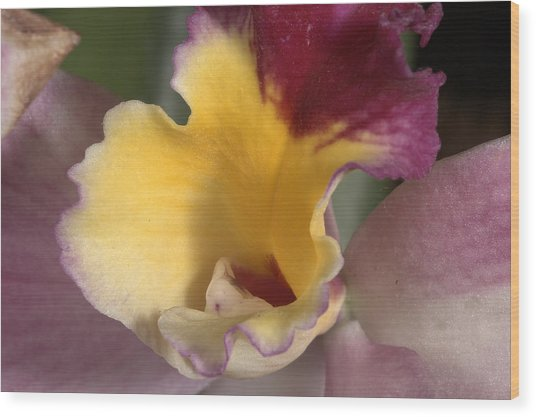 Orchid 489 Wood Print
