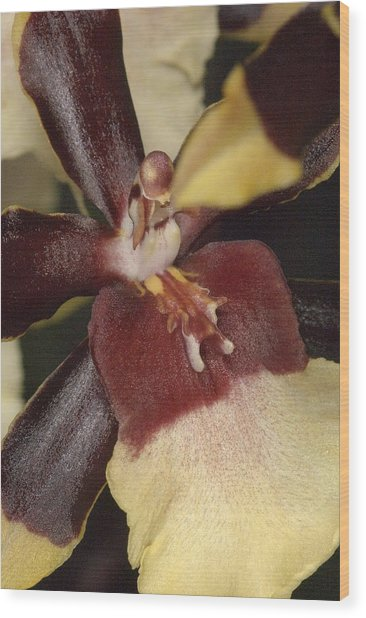 Orchid 496 Wood Print