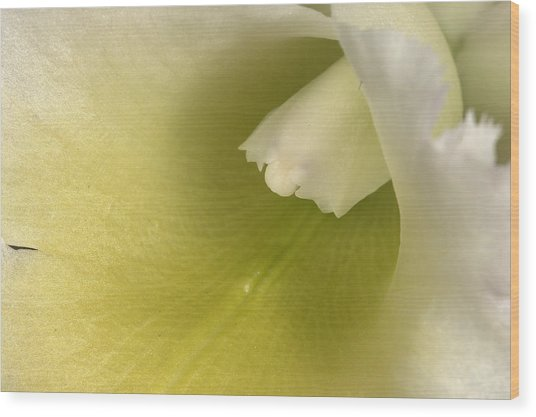 Orchid 501 Wood Print