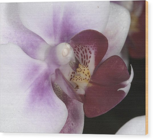 Orchid 503 Wood Print