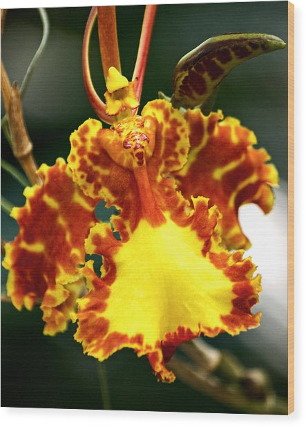 Orchid Wood Print by Andrew Chianese
