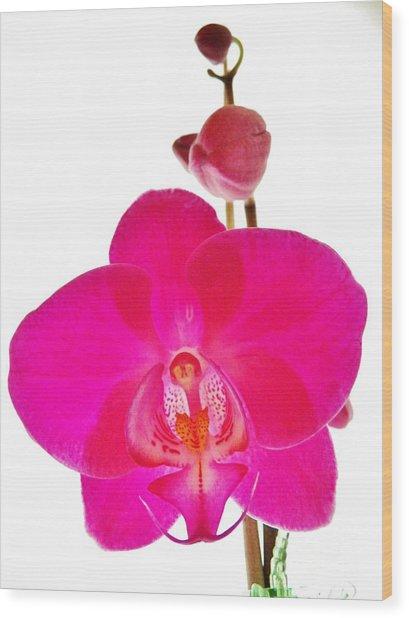 Orchid Angel 1 Wood Print