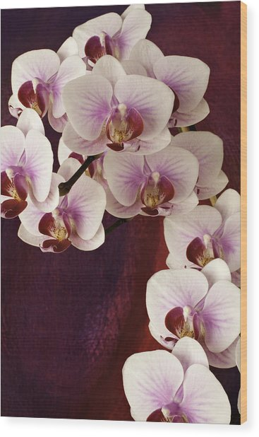 Orchid Cascade Wood Print